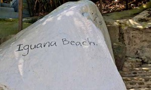 Iguana beach club patong phuket 7