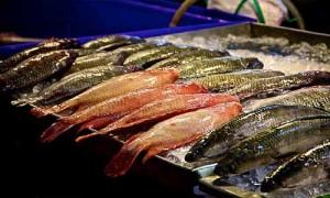 fish market phuket Banzaan Fresh Market