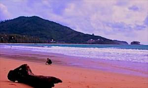 nai yang beach phuket 2