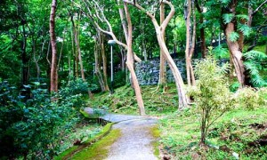 sightseeing phuket town 7 khao rang hill viewpoint