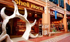 shell world museum patong 1 Patong Beach Activities